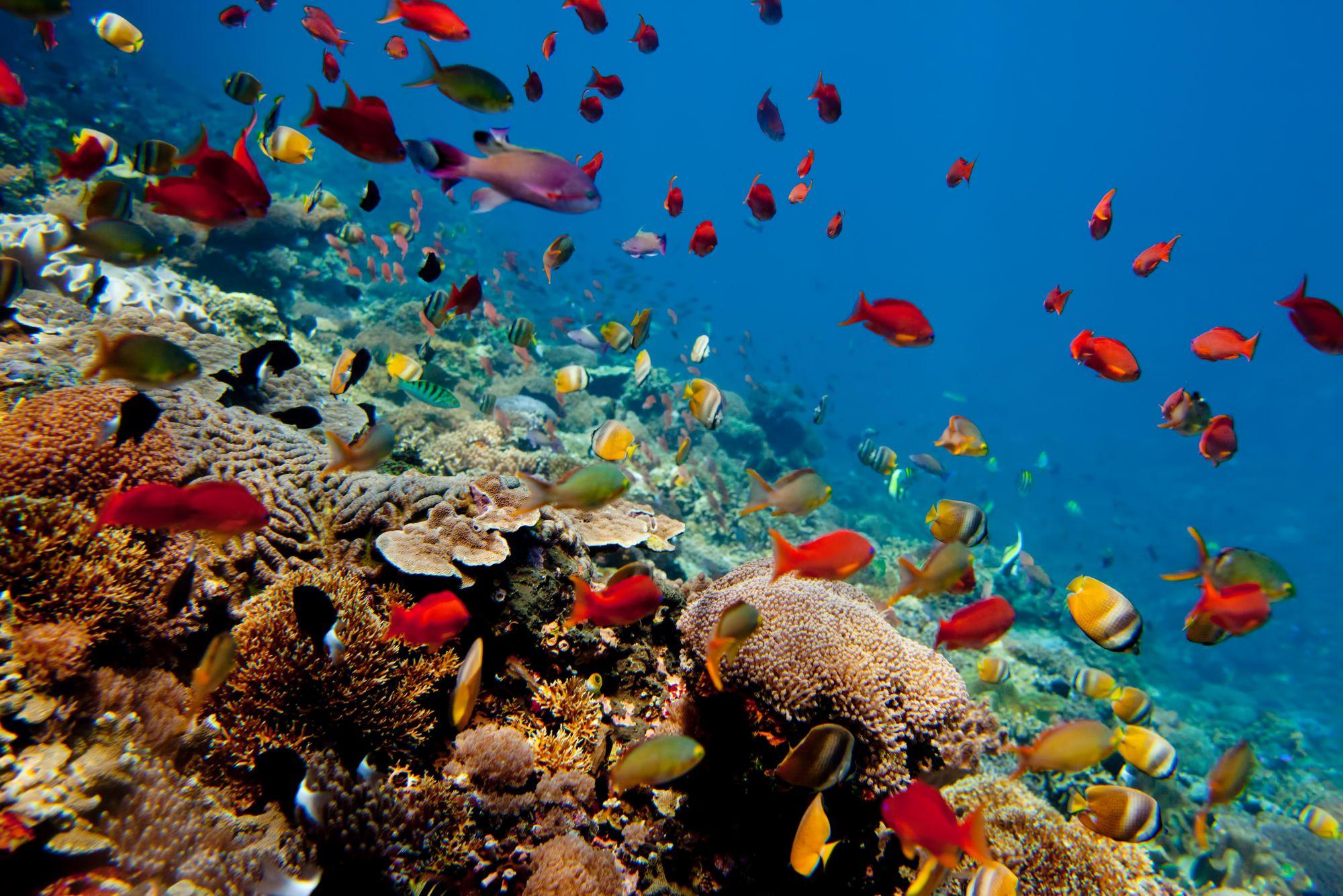 Plaja Amed, Bali