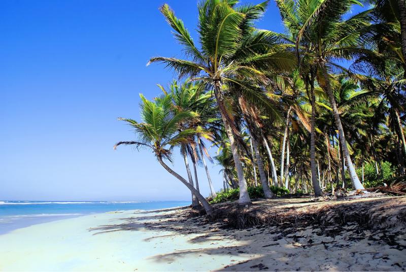 Plajă cu nisip alb din Republica Dominicană, înconjurată de mare și de palmieri