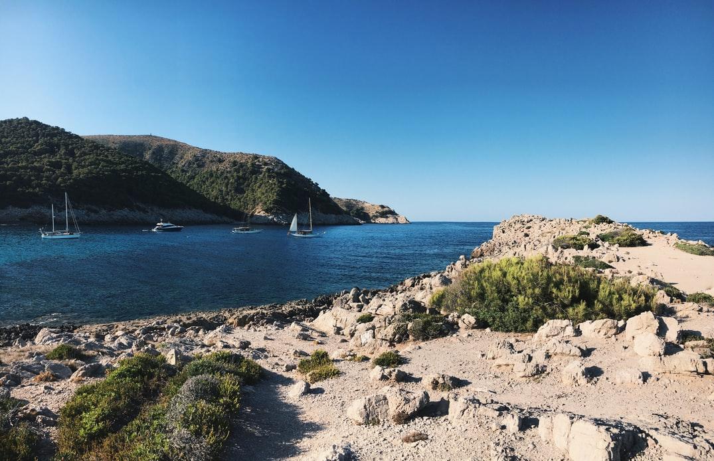 Agulla Mallorca